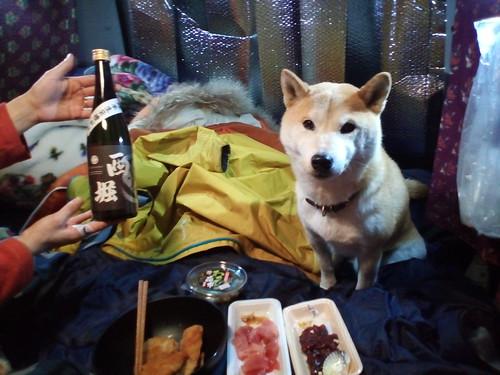 那須塩原の道の駅にて車中泊。栃木の地酒が美味しかったぞ。