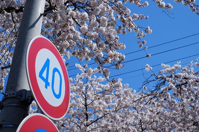 今年の桜1 X-E2 + XF 35mm F1.4R