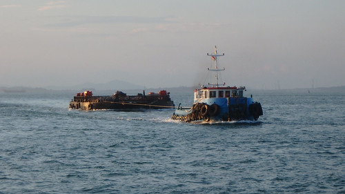 Barge of live pigs being towed to Singapore