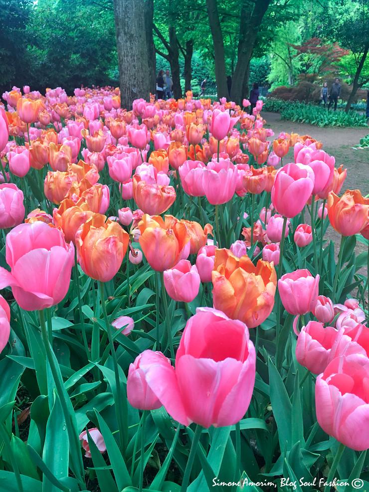 Lindas tulipas logo na entrada!