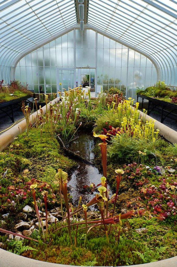 indoor bog garden by karlgercenscom garden lectures - Bog Garden