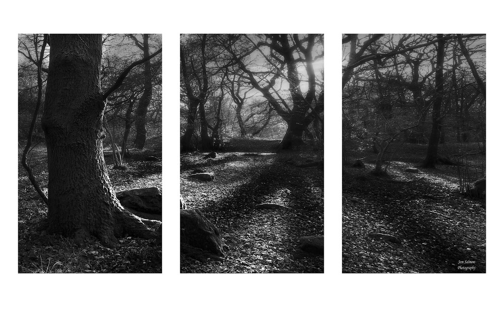 Triptych Photography Flickr Forest Floor Triptych Flickr Photo Sharing