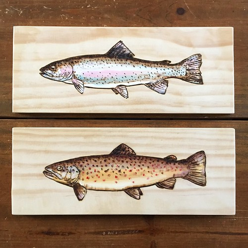 Today, I made a brown trout to match the rainbow trout I did yesterday. Pyrography and acrylic paint.