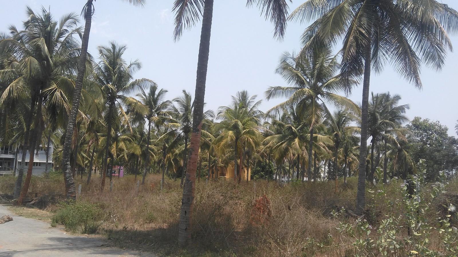 Balaji Garden Coconut trees | Coco Ville | Flickr