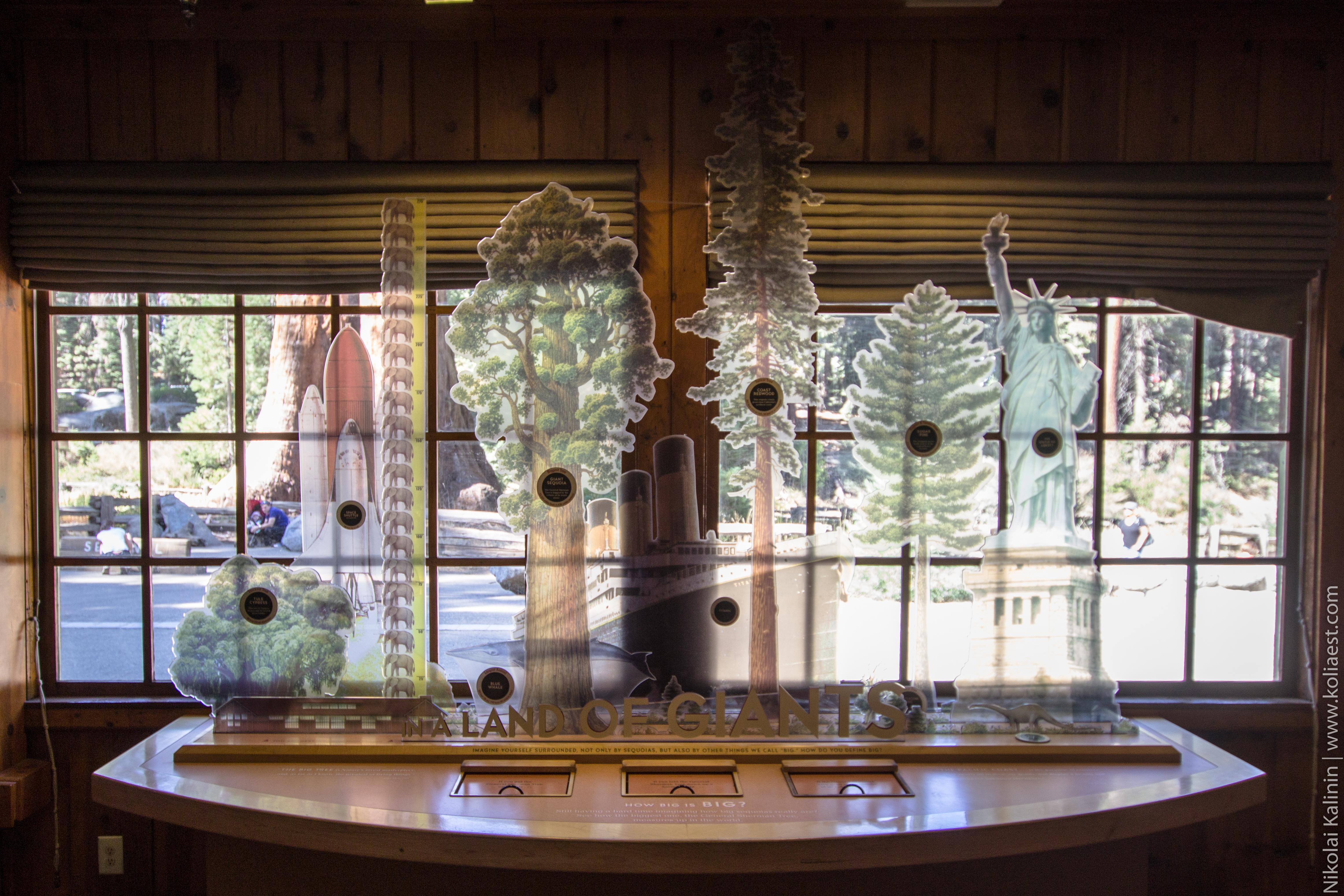 Sequoia-62-4