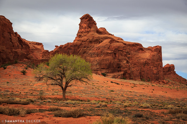 A Tree in Monument Valley