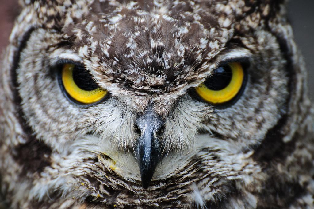 Owls @ Dragonheart, Enschede   Archangel12   Flickr