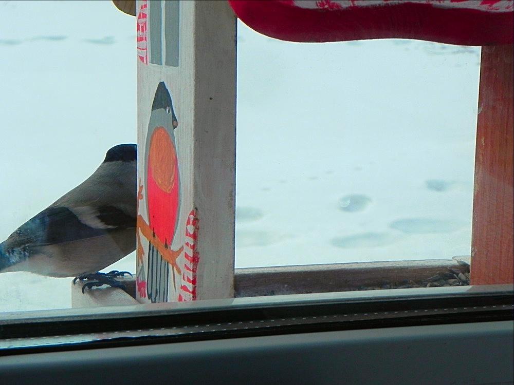 птички Татарстана 5