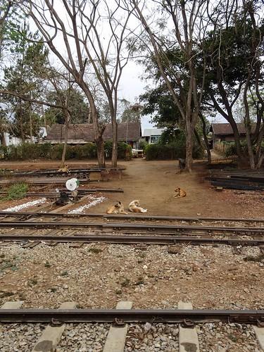Rail dogs