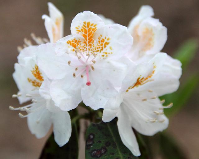 20170429_WV_Botanic_Garden_019
