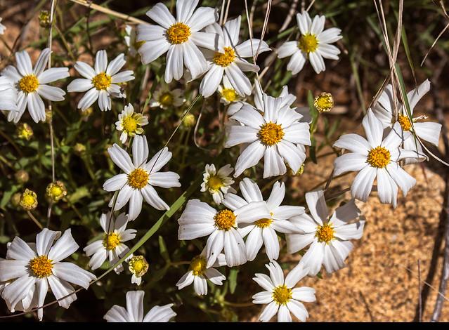 Flowers-25-7D2-032017