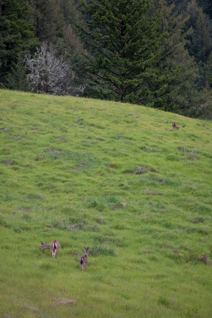 04.23. Long Ridge Open Space Preserve