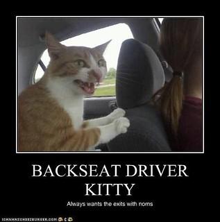 Cat Testing Animal