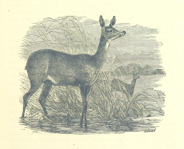 Image taken from page 29 of 'Great African Travellers, from Bruce and Mungo Park to Livingstone and Stanley ... With ... illustrations'