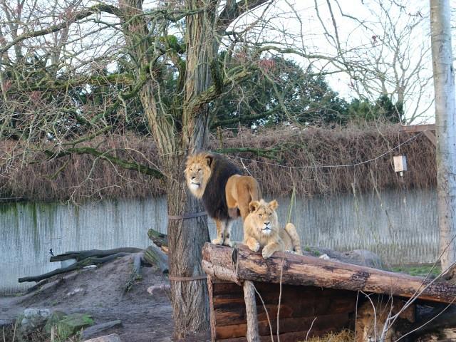zoo copenhaga 1 obiective turistice copenhaga