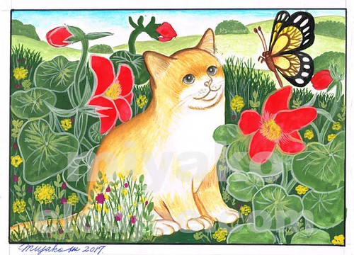 Cat with butterfly and Red capucine
