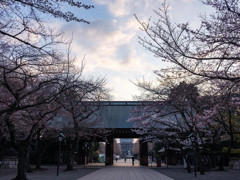 靖国神社桜2017