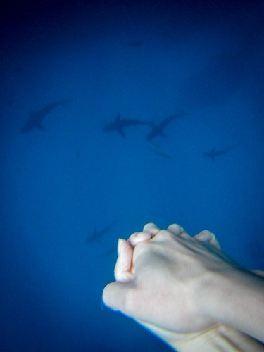 Us holding hands while watching the beautiful sharks | by hua foundation