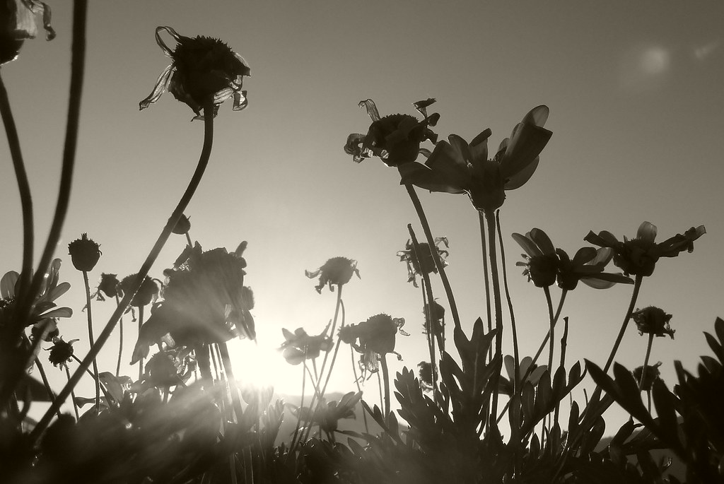 Resultado de la imagen para imagenes de muchas flores marchitas