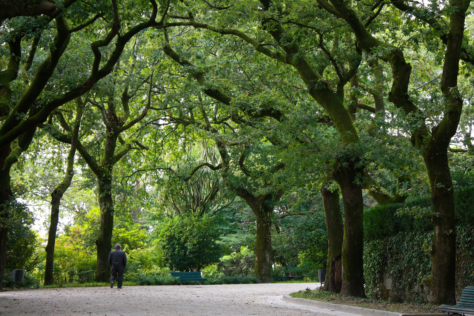 Tree-lined path in the Parque da Alameda, Santiago de Compostela, Spain