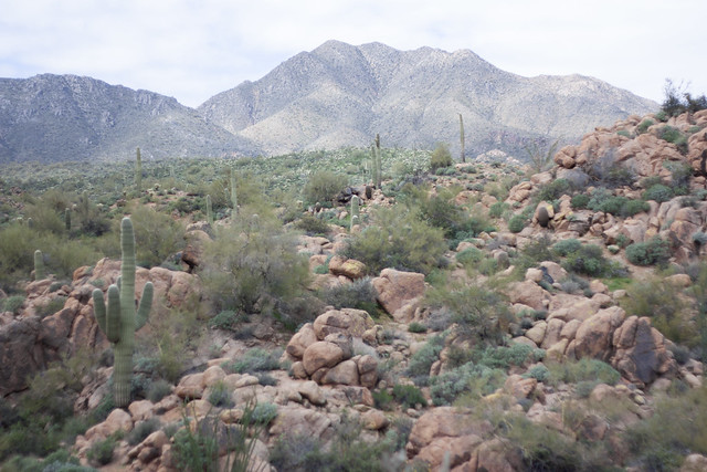 McDowell Mountains AZ