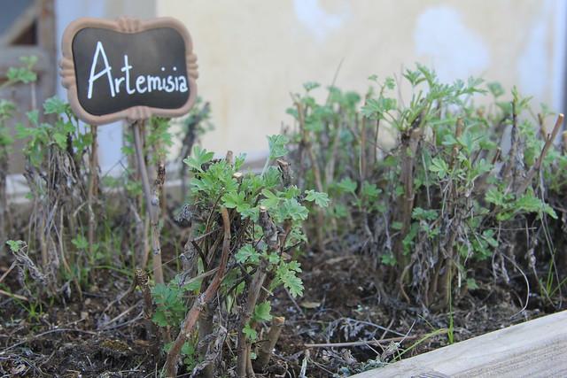 Herb Garden, Spezieria di Santa Fina