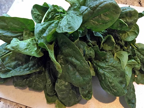 harvest_spinach IMG_0698