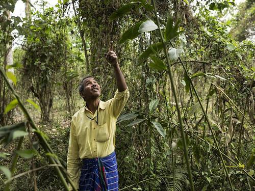 अपने जंगलों की निगरानी करते पद्मश्री जादव पयांग