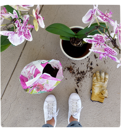 Re-potting Orchids