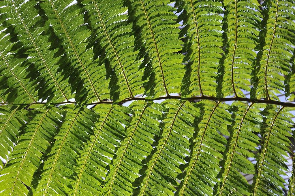 Jardin des plantes paris rog01 flickr for Jardin des plantes orchidees 2016