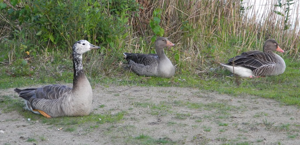 canada goose shop hannover