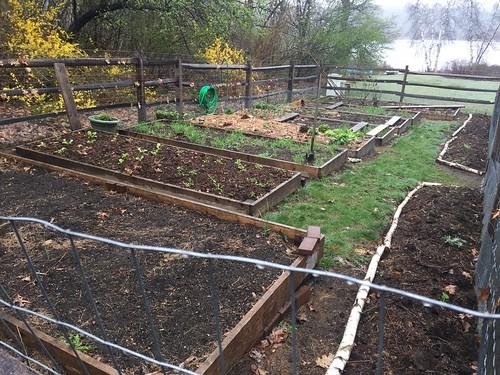garden IMG_0945