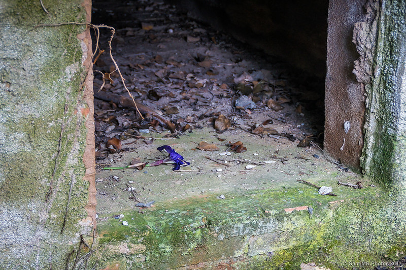 Flor en un nicho del cementerio de Marmellar