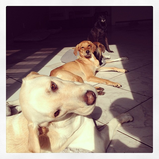 Pet Hotel Finder