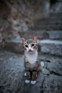 Cute cat | by PeterJot