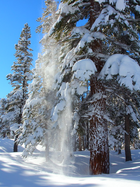 IMG_9475 Snow Falling