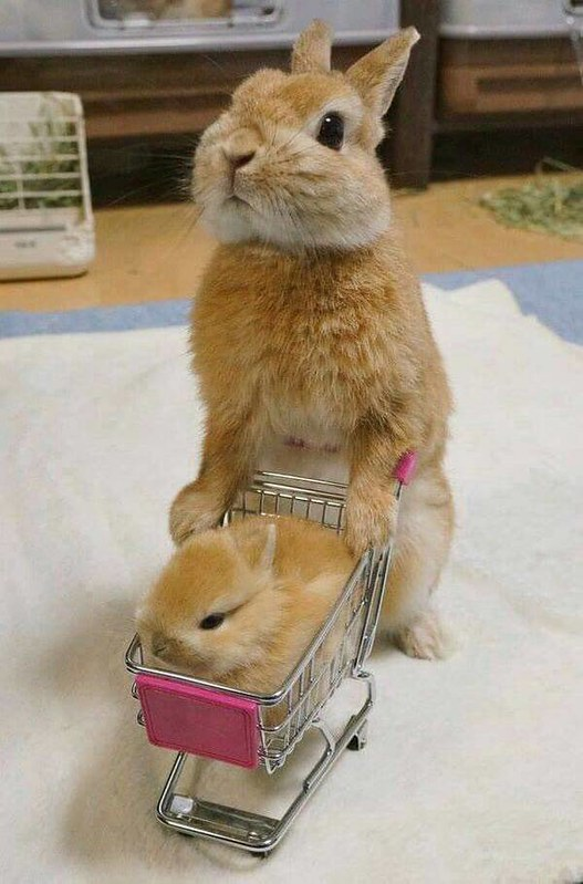 Easter Bunny in a shopping cart