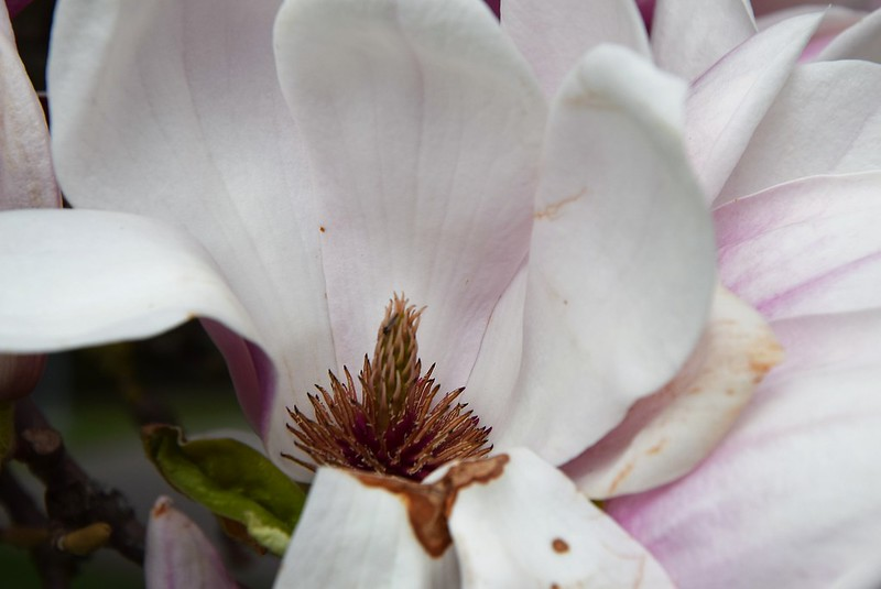 Magnolia 05.04 (1)