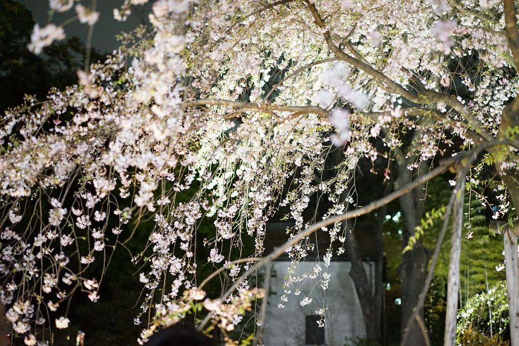 六義園_201704_2