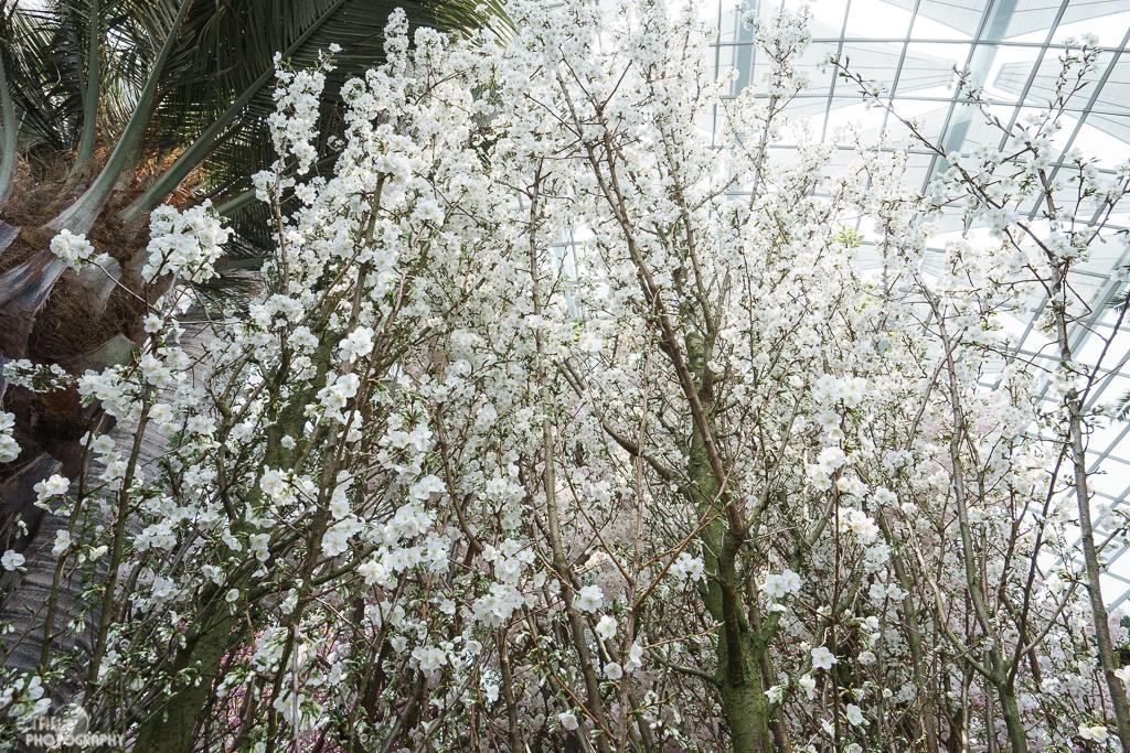 Blossom Bliss - 004