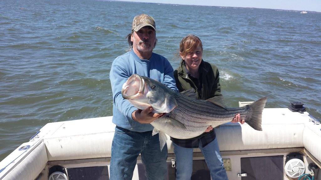 Striped bass courtesy of dino kalandras maryland for Md dnr fishing