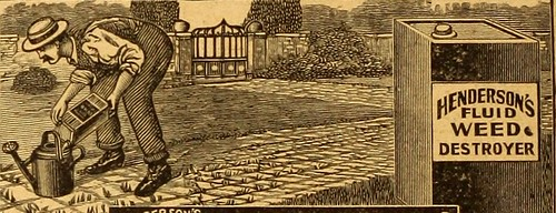 "Image from page 184 of ""Everything for the garden : 1920"" (1920) 