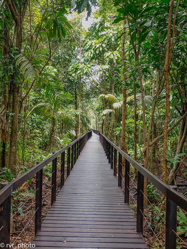 Sendero Los Cativos, Parque Cahuita, Costa Rica