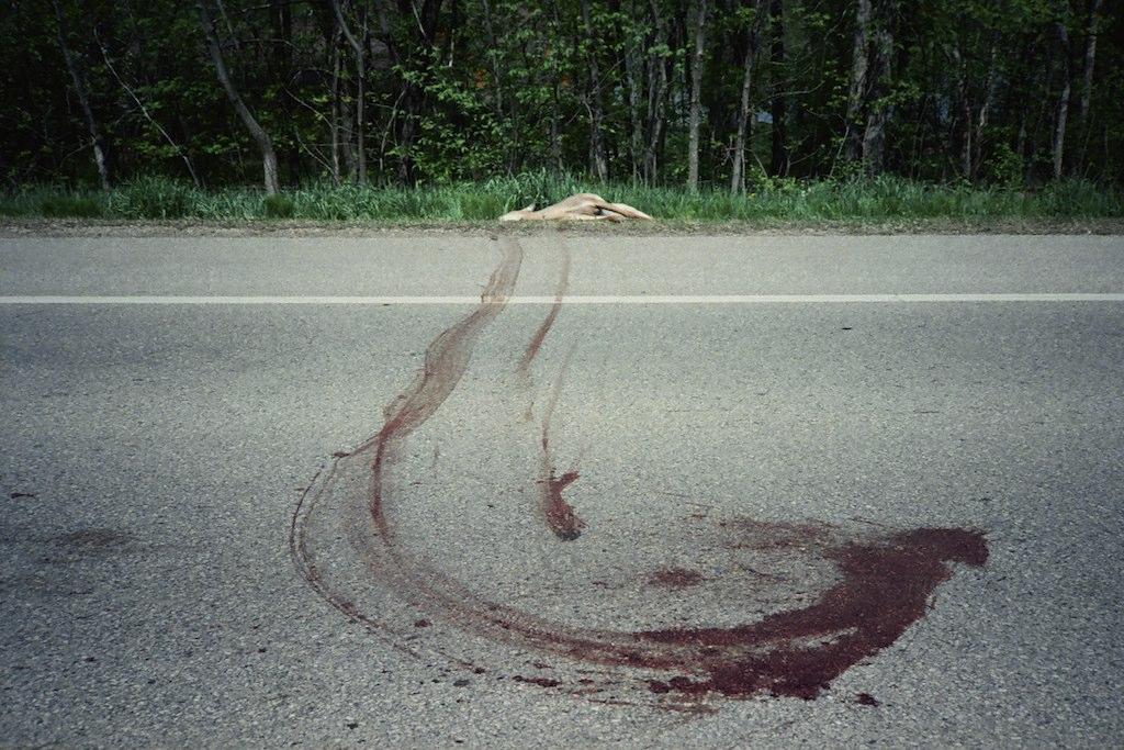 deer, highway 25 | by Amy Fichter