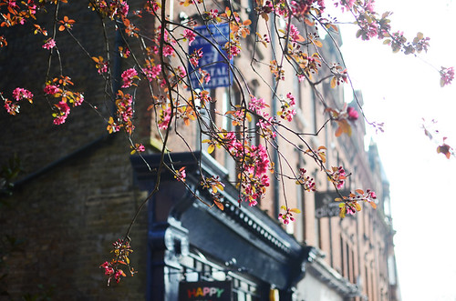7 hampstead glowing pink blossoms | by night.owl