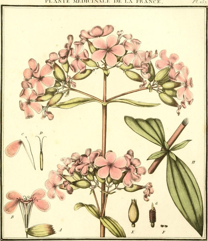 """Résultat de recherche d'images pour """"herbier"""""""