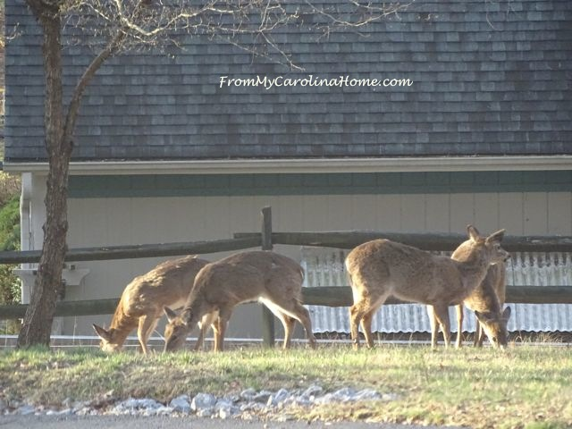 Deer herd visit -5