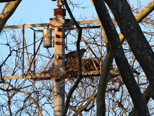 GT Nest - 2051