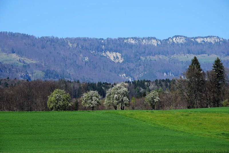 Waldegg 07.04 (4)