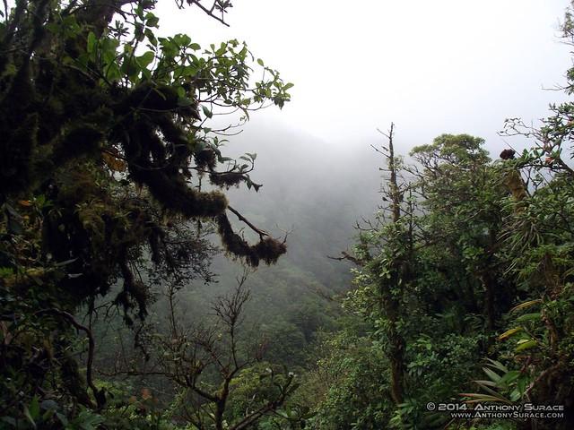 Monteverde Cloud Forest, CR